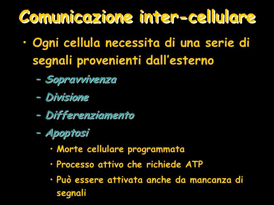 Comunicazione inter-cellulare
