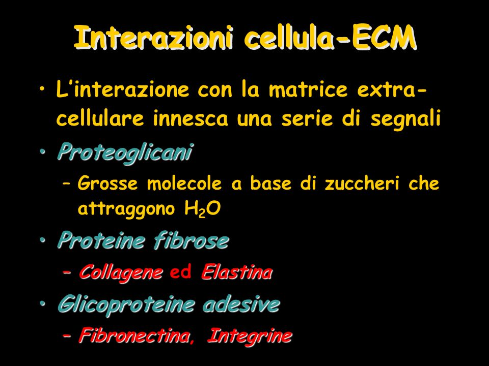 Interazioni cellula-ECM