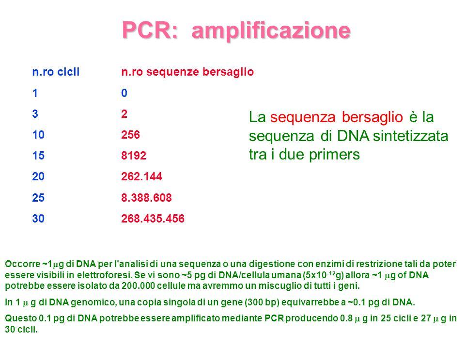 PCR: amplificazione n.ro cicli. 1. 3. 10. 15. 20. 25. 30. n.ro sequenze bersaglio. 2. 256.