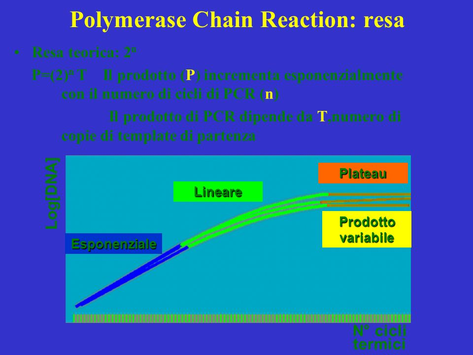 Polymerase Chain Reaction: resa