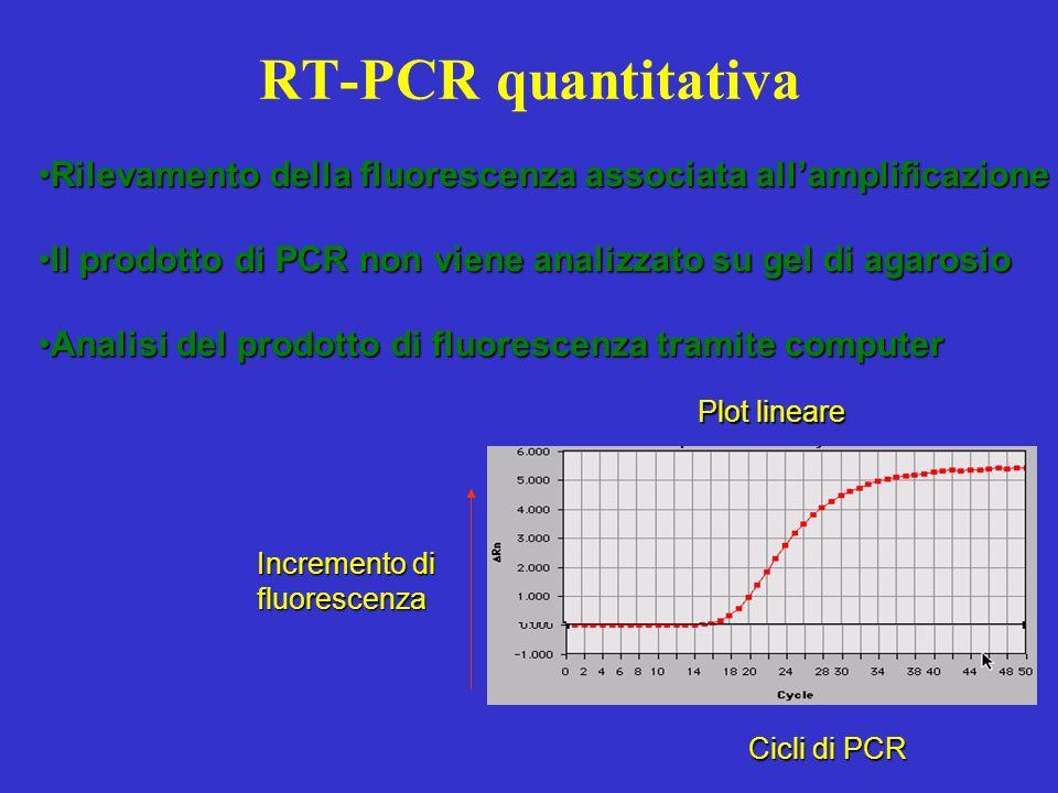 RT-PCR quantitativa Rilevamento della fluorescenza associata all'amplificazione. Il prodotto di PCR non viene analizzato su gel di agarosio.