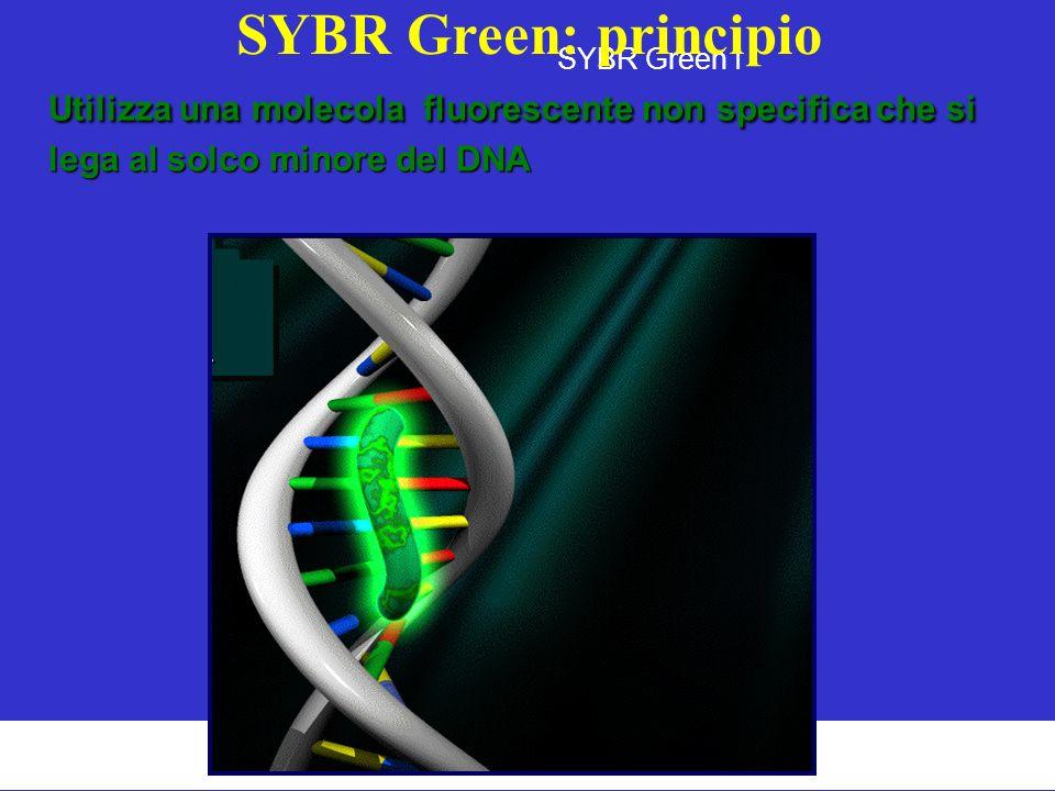 SYBR Green: principio SYBR Green I.