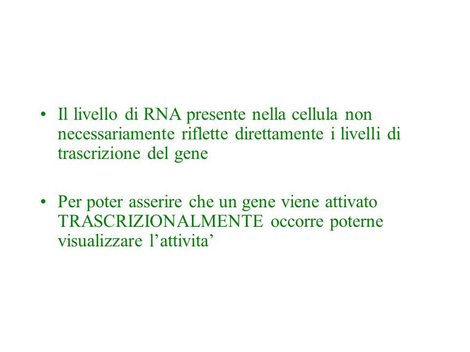 Il livello di RNA presente nella cellula non necessariamente riflette direttamente i livelli di trascrizione del gene