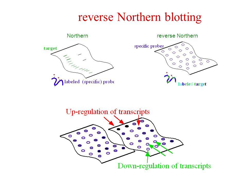 reverse Northern blotting