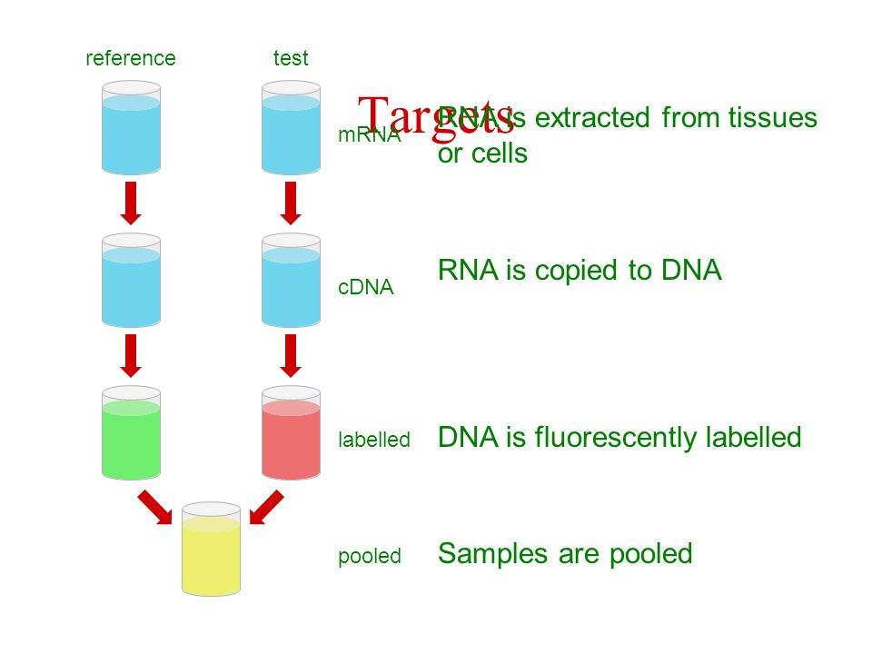 Targets RNA is extracted from tissues or cells RNA is copied to DNA