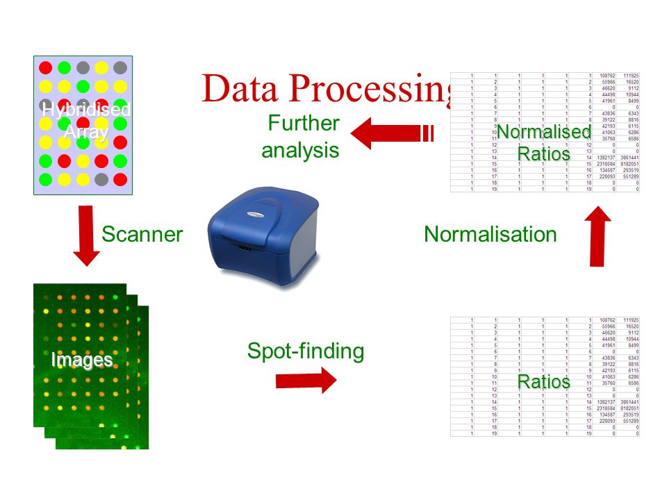 Data Processing Normalisation Further analysis Scanner Spot-finding