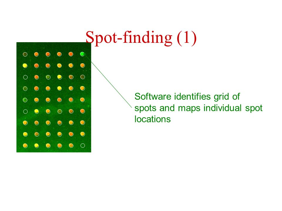 Spot-finding (1) Software identifies grid of spots and maps individual spot locations