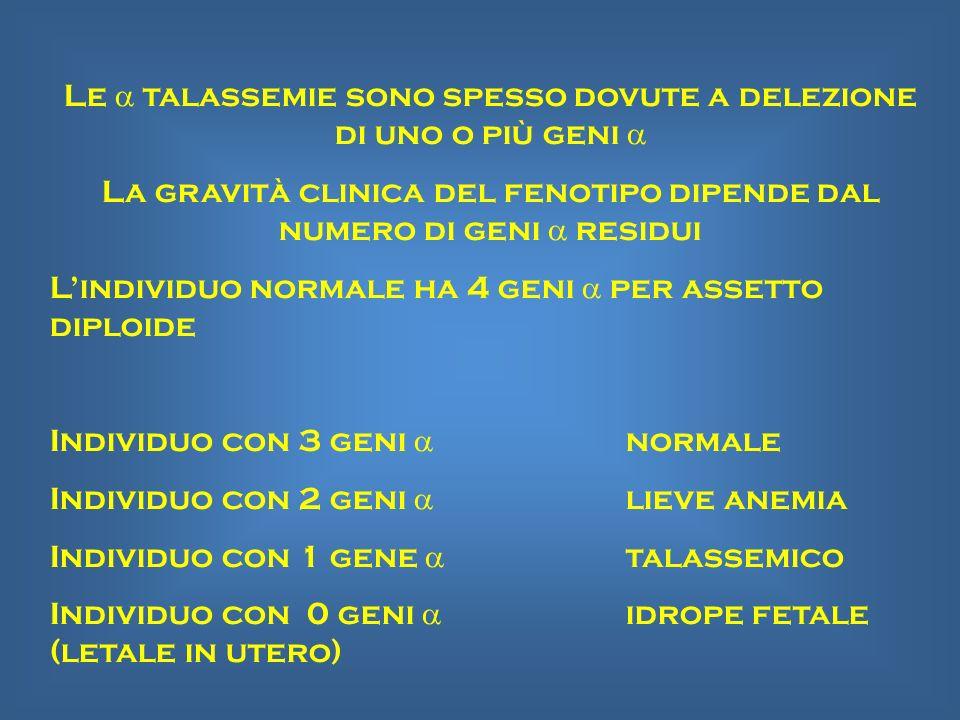 Le a talassemie sono spesso dovute a delezione di uno o più geni a
