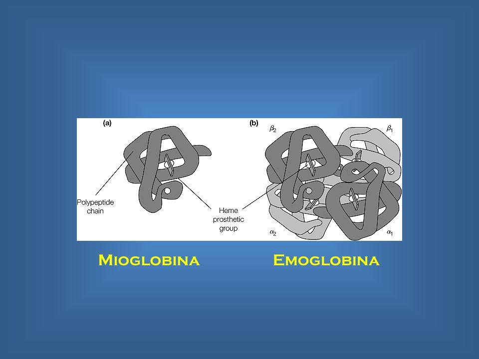Mioglobina Emoglobina