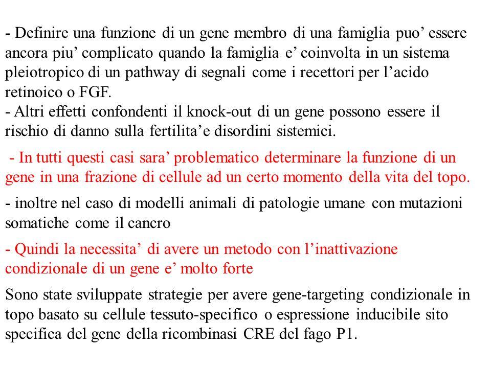 - Definire una funzione di un gene membro di una famiglia puo' essere ancora piu' complicato quando la famiglia e' coinvolta in un sistema pleiotropico di un pathway di segnali come i recettori per l'acido retinoico o FGF.