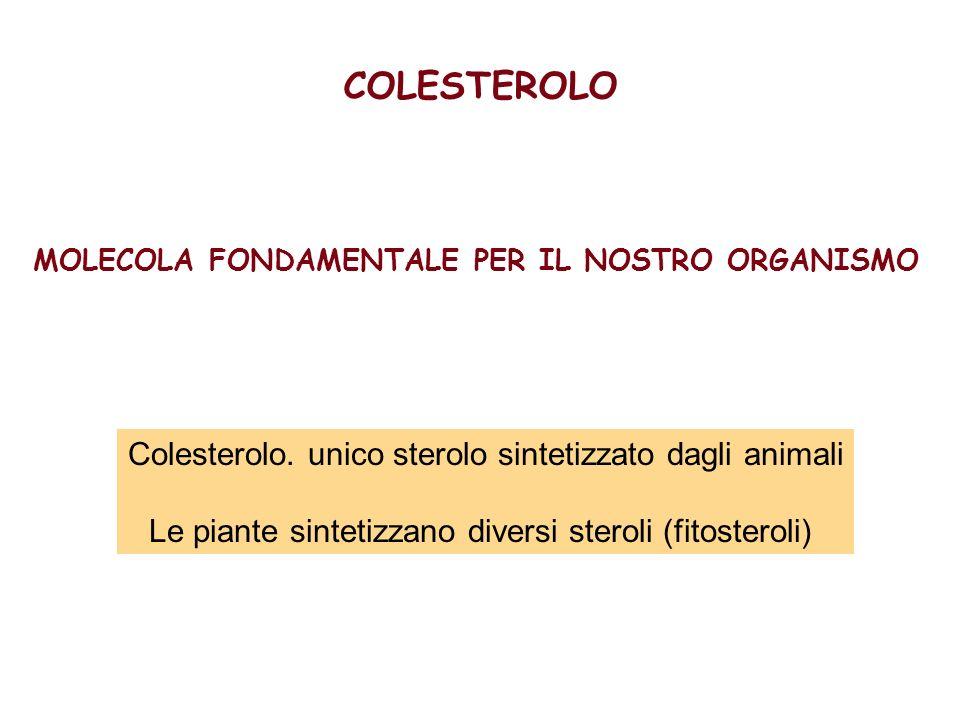 COLESTEROLO Colesterolo. unico sterolo sintetizzato dagli animali