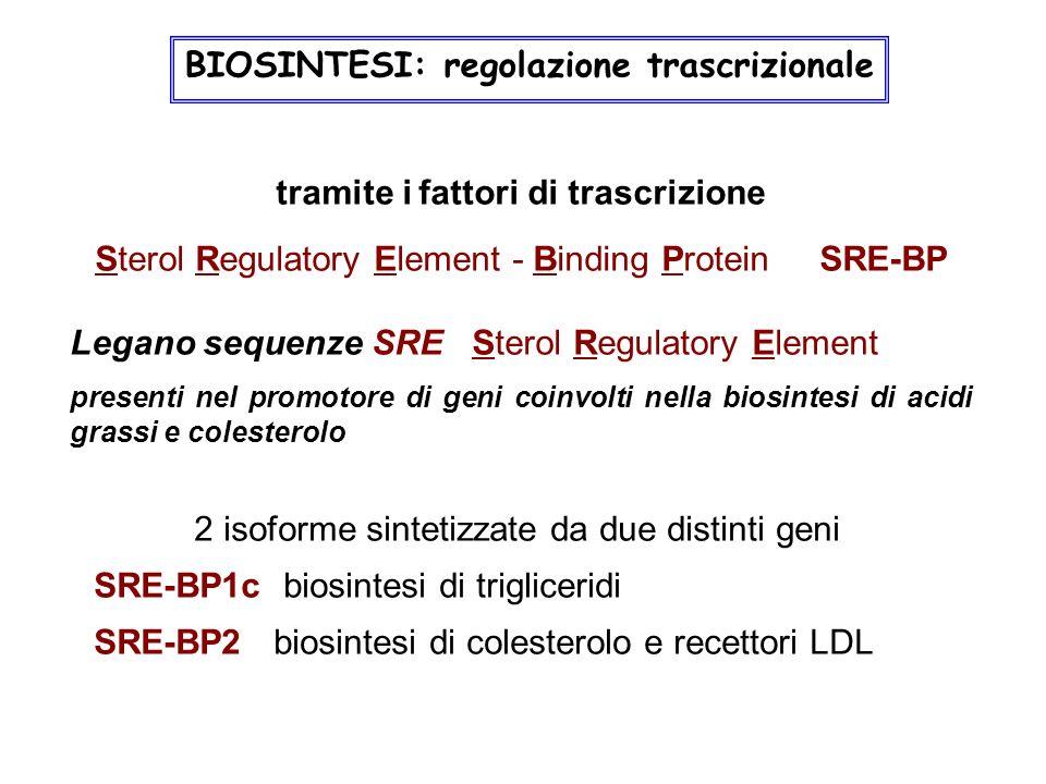 BIOSINTESI: regolazione trascrizionale