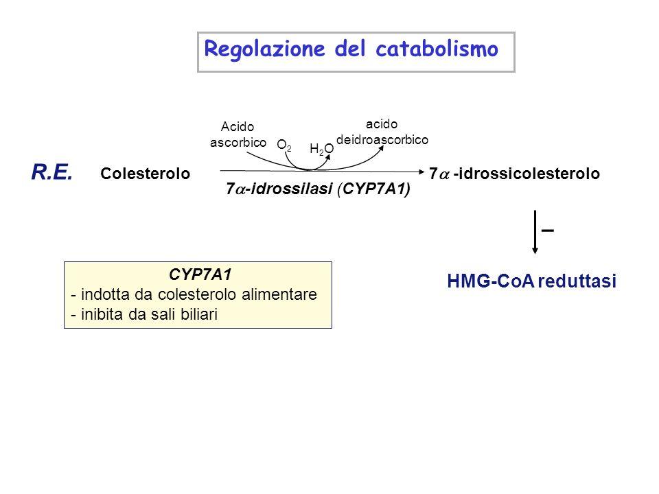 Regolazione del catabolismo: