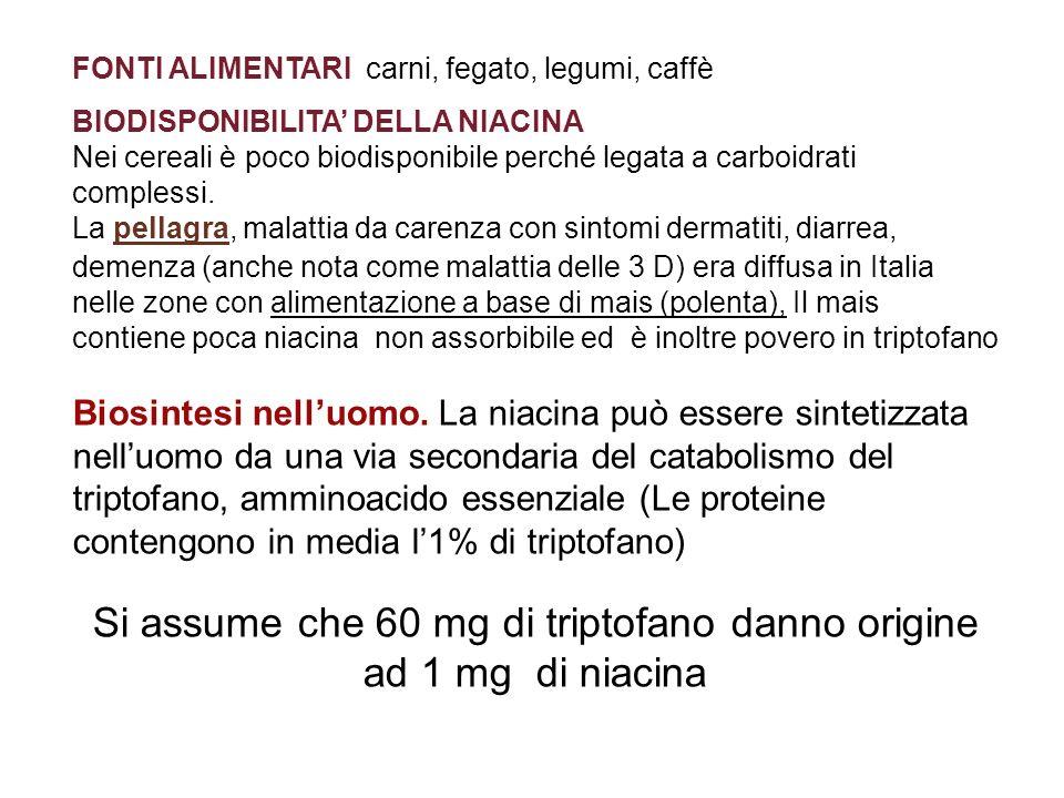 Si assume che 60 mg di triptofano danno origine ad 1 mg di niacina