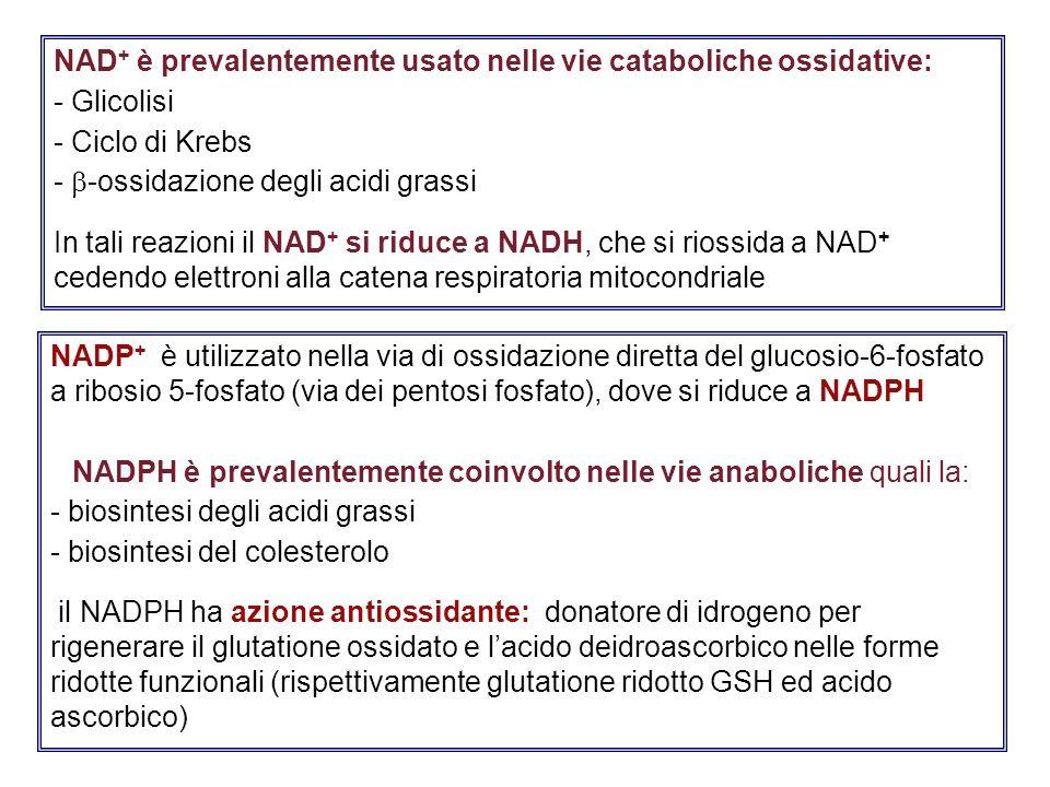 NAD+ è prevalentemente usato nelle vie cataboliche ossidative: