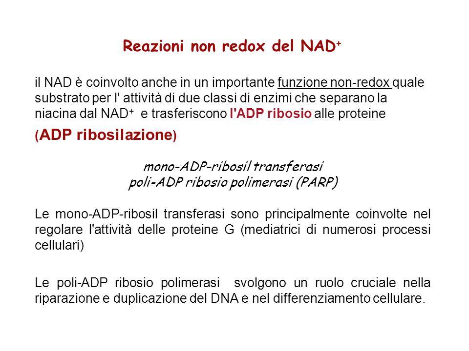Reazioni non redox del NAD+