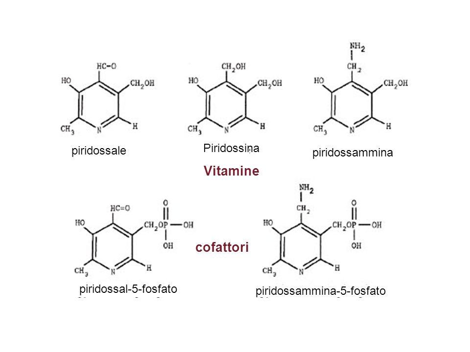piridossammina-5-fosfato