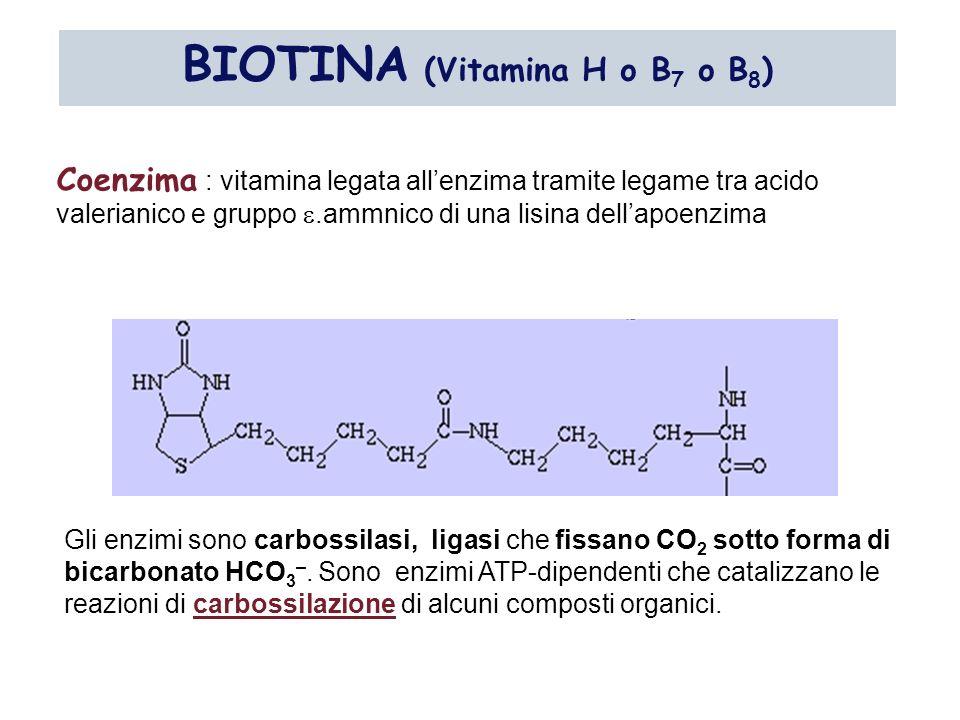BIOTINA (Vitamina H o B7 o B8)