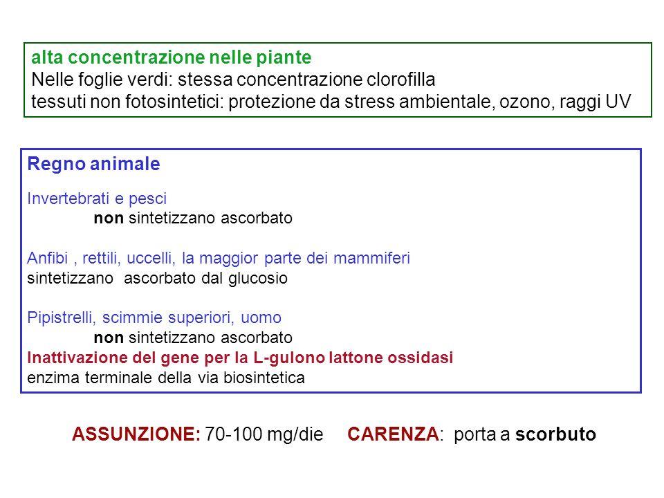 alta concentrazione nelle piante