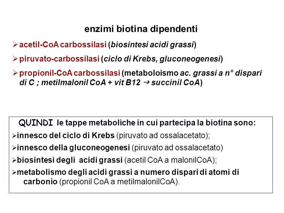 enzimi biotina dipendenti