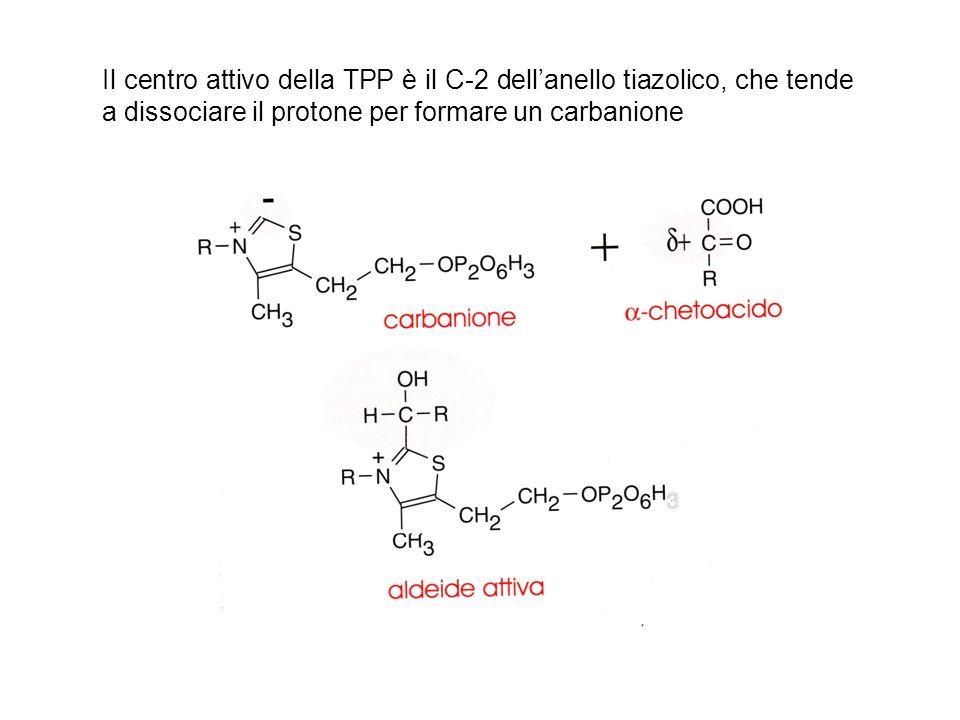Il centro attivo della TPP è il C-2 dell'anello tiazolico, che tende a dissociare il protone per formare un carbanione