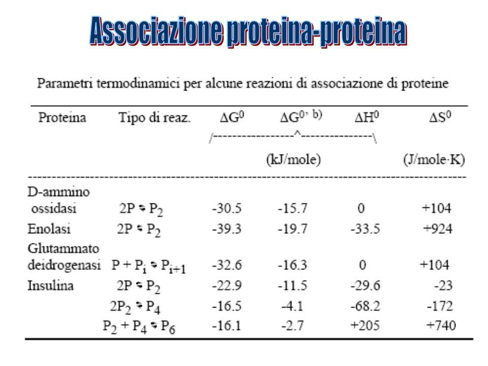 Associazione proteina-proteina