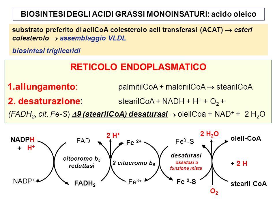 BIOSINTESI DEGLI ACIDI GRASSI MONOINSATURI: acido oleico