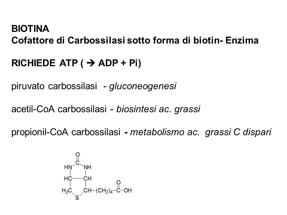 BIOTINA Cofattore di Carbossilasi sotto forma di biotin- Enzima. RICHIEDE ATP (  ADP + Pi) piruvato carbossilasi - gluconeogenesi.