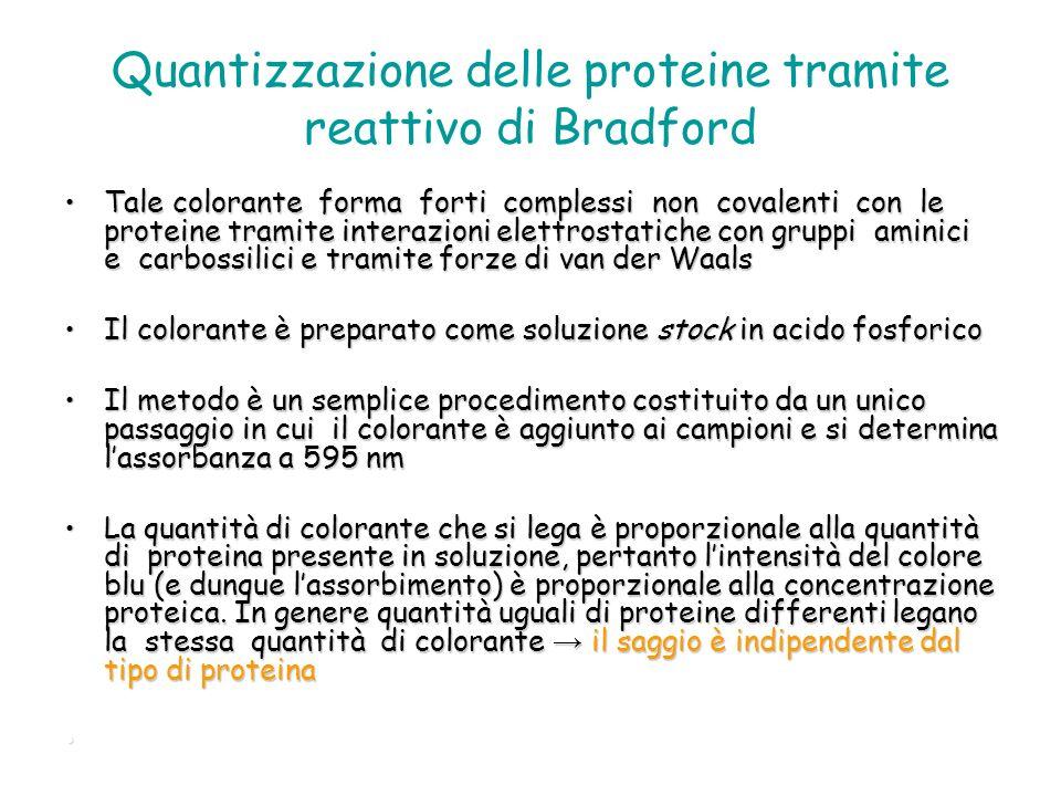 Quantizzazione delle proteine tramite reattivo di Bradford