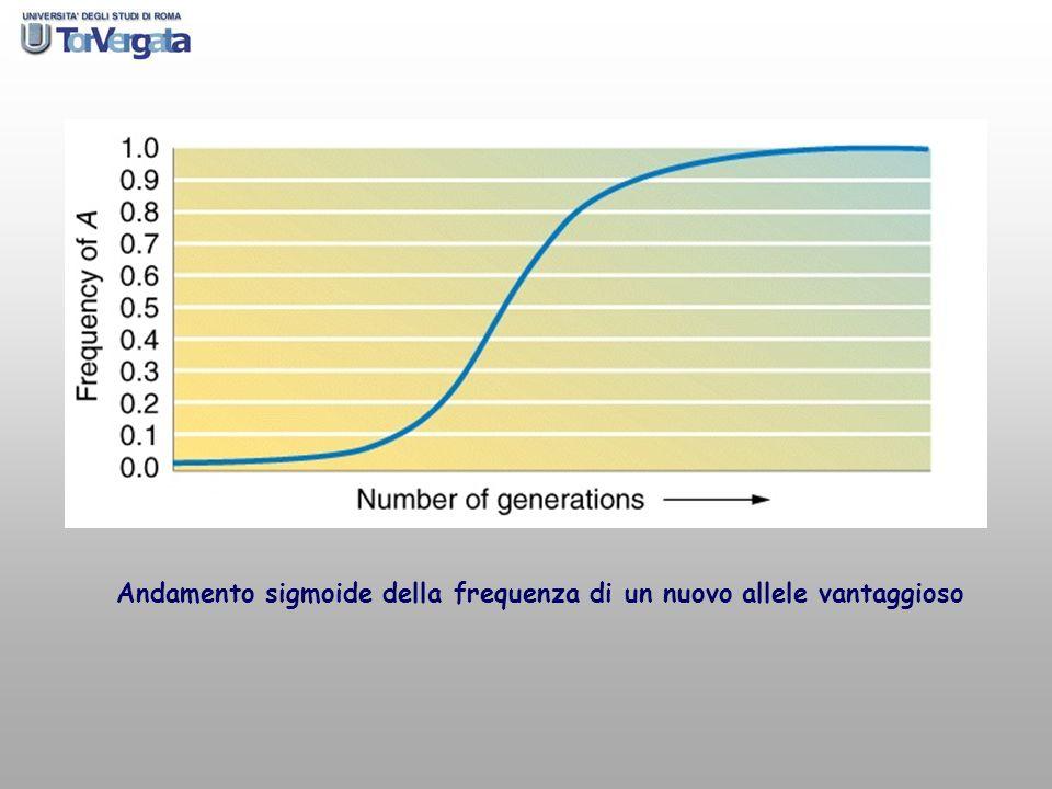 Andamento sigmoide della frequenza di un nuovo allele vantaggioso