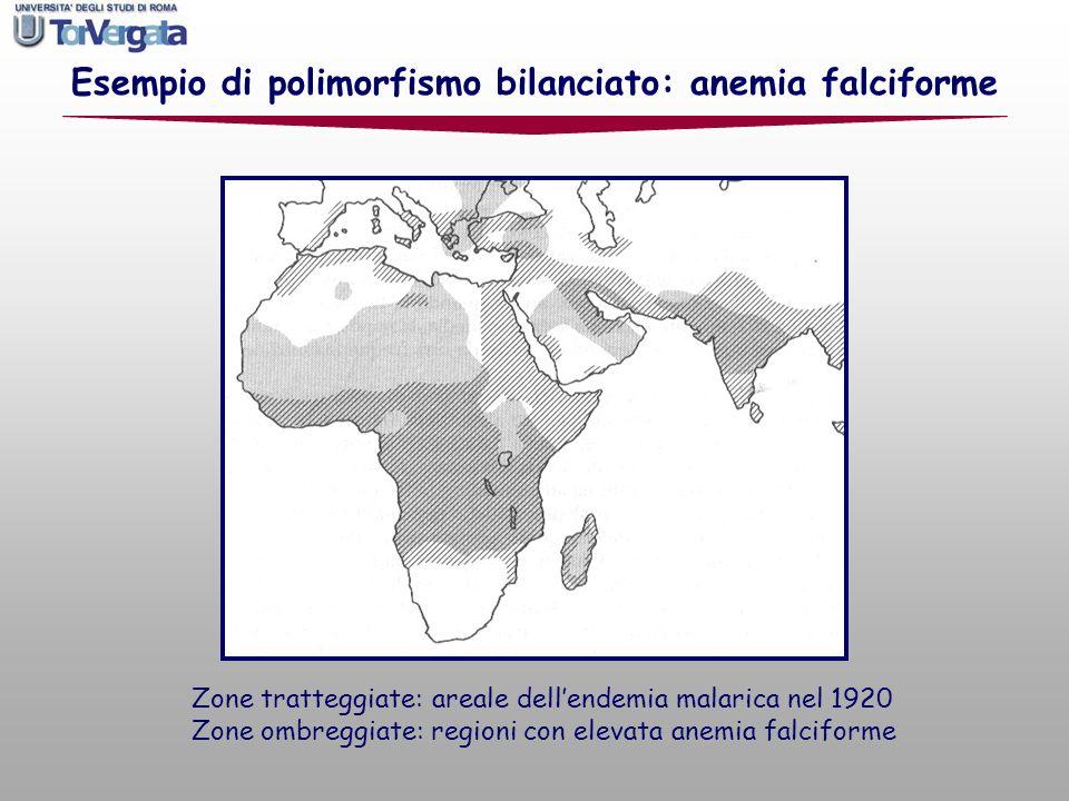 Esempio di polimorfismo bilanciato: anemia falciforme