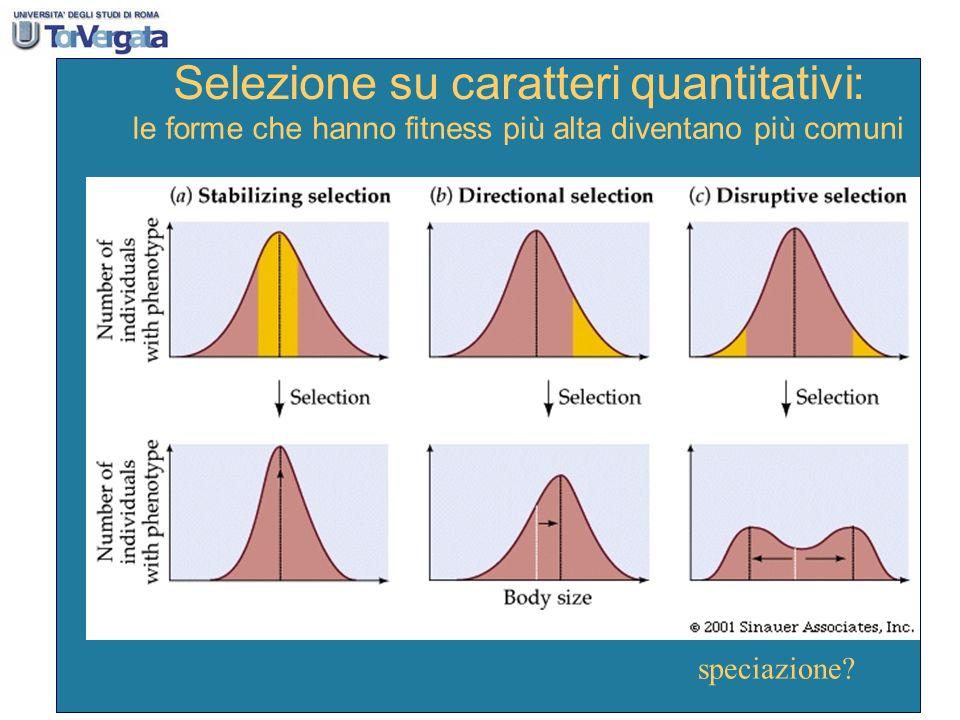 Selezione su caratteri quantitativi : le forme che hanno fitness pi ù