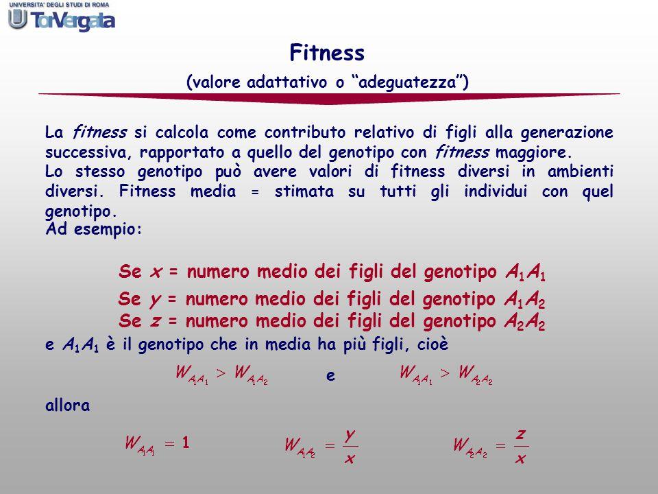 Fitness Se x = numero medio dei figli del genotipo A1A1