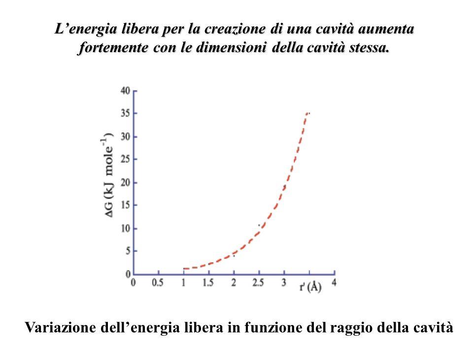 L'energia libera per la creazione di una cavità aumenta fortemente con le dimensioni della cavità stessa.