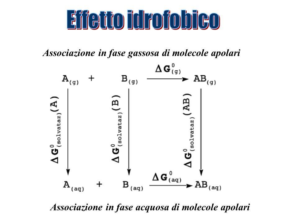 Effetto idrofobico Associazione in fase gassosa di molecole apolari