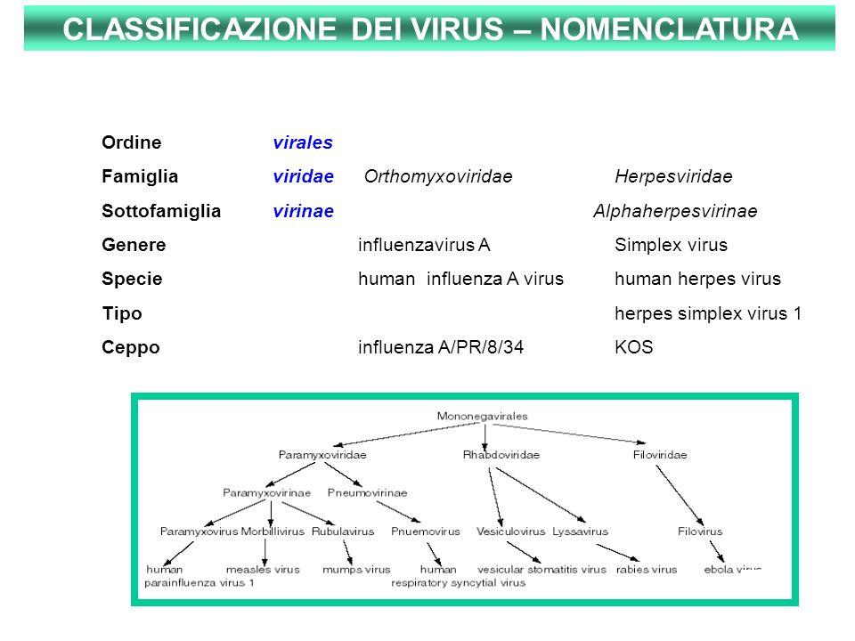 CLASSIFICAZIONE DEI VIRUS – NOMENCLATURA