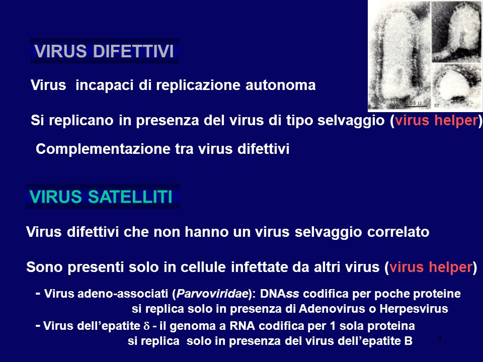 VIRUS DIFETTIVI VIRUS SATELLITI