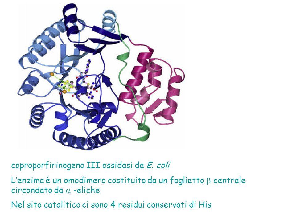 coproporfirinogeno III ossidasi da E. coli