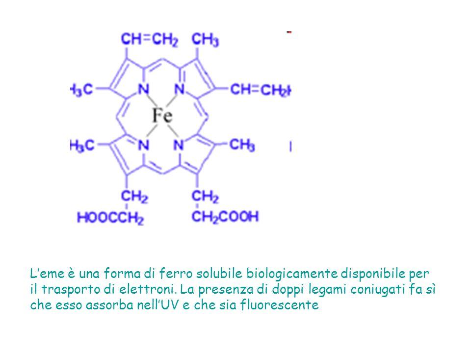 L'eme è una forma di ferro solubile biologicamente disponibile per il trasporto di elettroni.