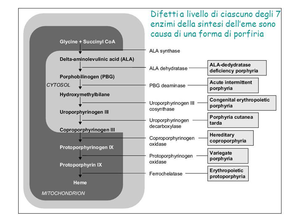 Difetti a livello di ciascuno degli 7 enzimi della sintesi dell'eme sono causa di una forma di porfiria