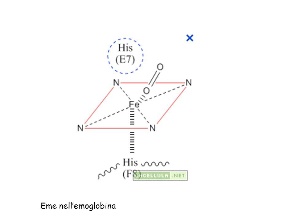 Eme nell'emoglobina