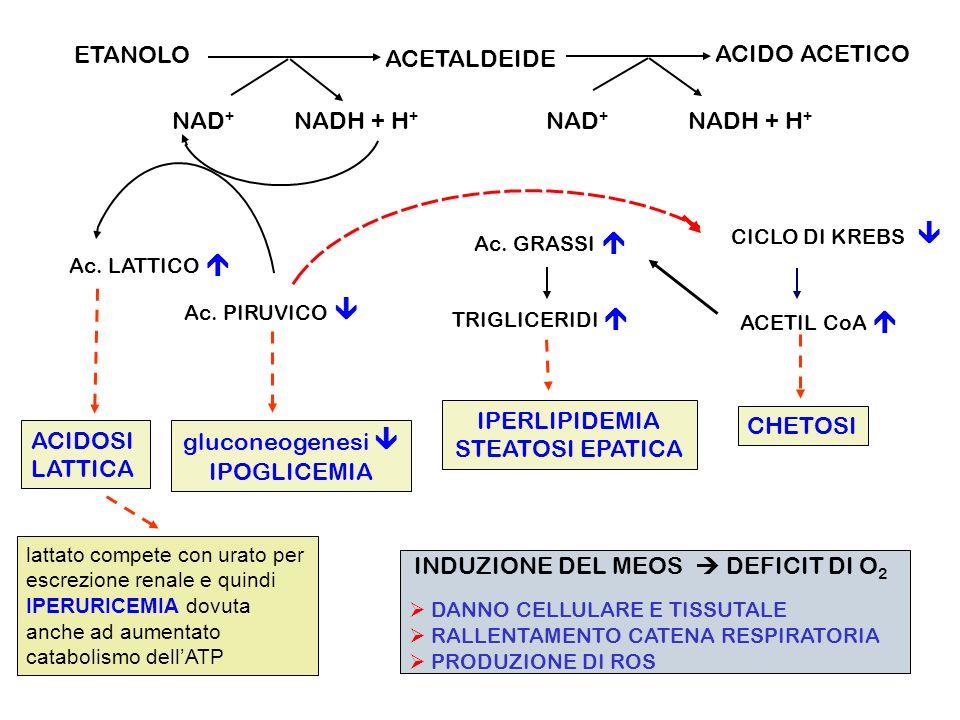 ETANOLO ACETALDEIDE ACIDO ACETICO NAD+ NADH + H+ ACIDOSI LATTICA