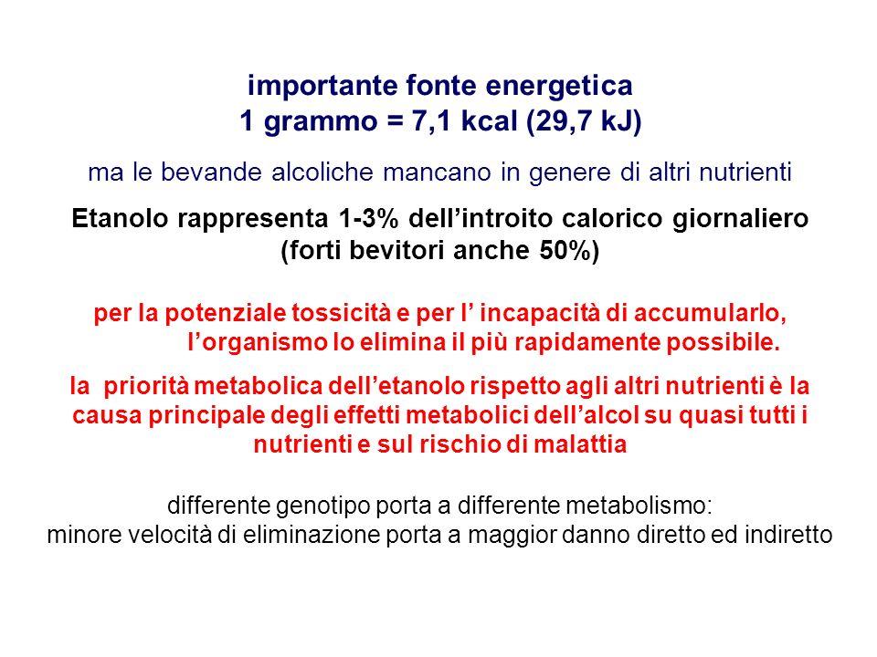 importante fonte energetica 1 grammo = 7,1 kcal (29,7 kJ)