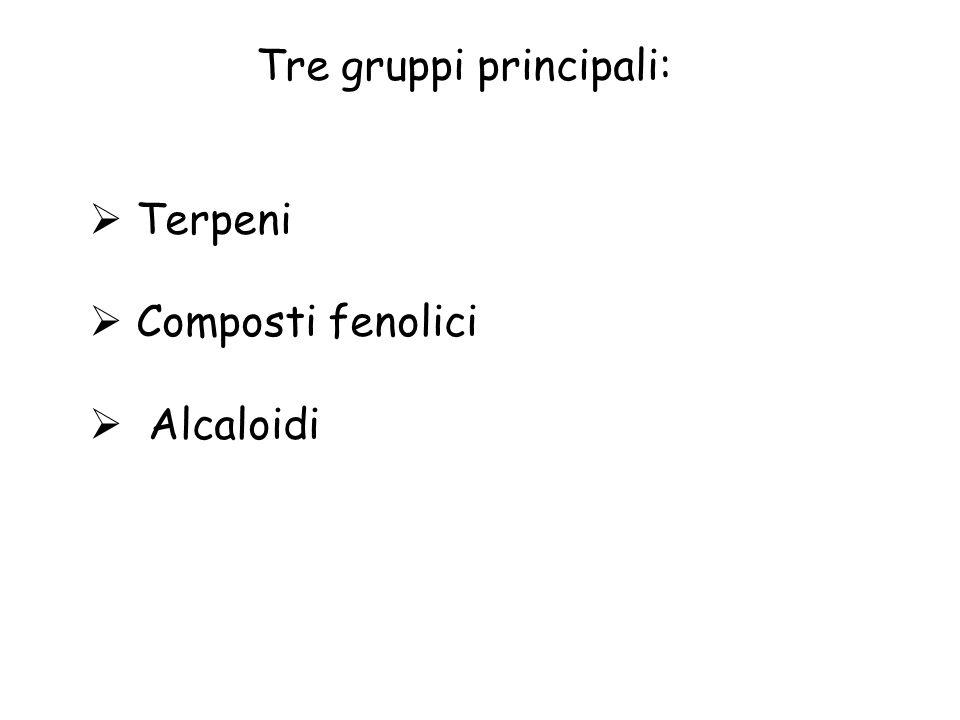 Tre gruppi principali: