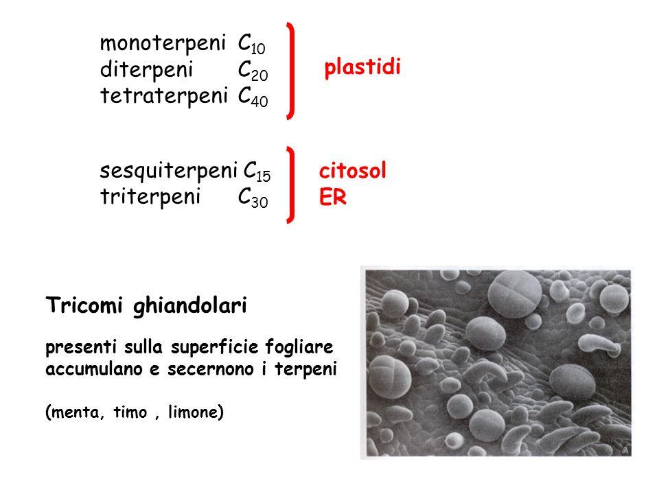 monoterpeni C10 diterpeni C20 plastidi tetraterpeni C40
