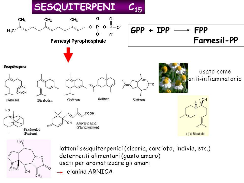 SESQUITERPENI C15 GPP + IPP FPP Farnesil-PP usato come