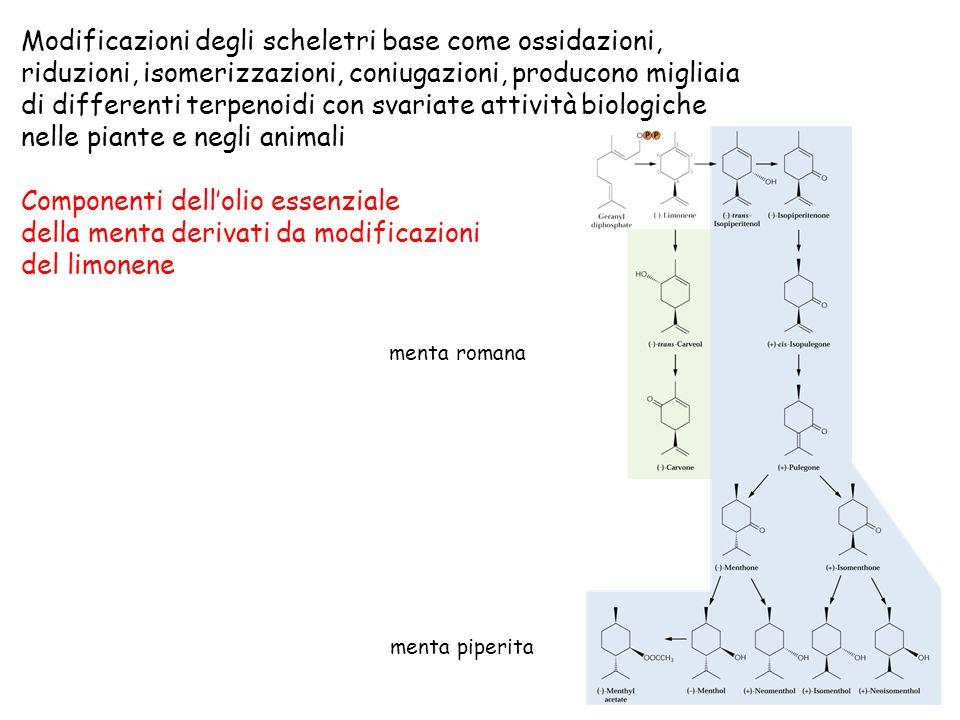 Modificazioni degli scheletri base come ossidazioni,