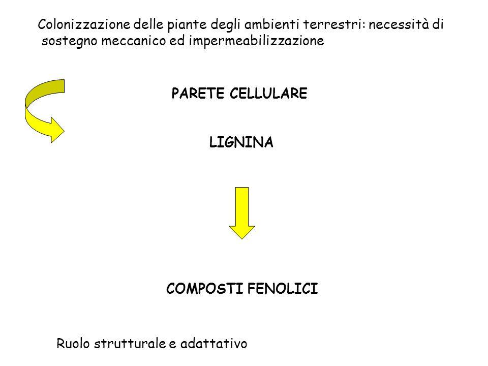 Ruolo strutturale e adattativo
