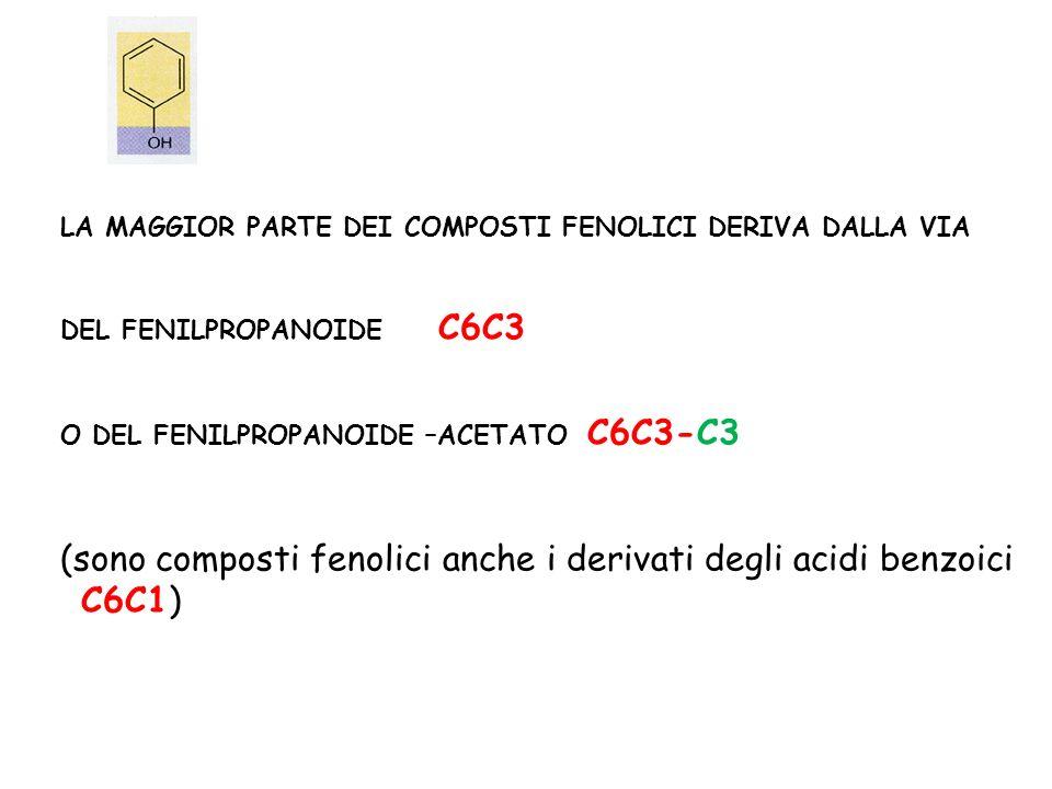 (sono composti fenolici anche i derivati degli acidi benzoici C6C1)