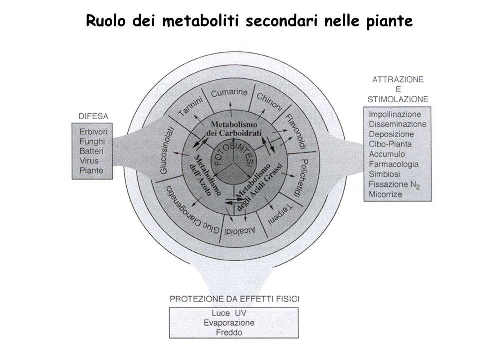 Ruolo dei metaboliti secondari nelle piante